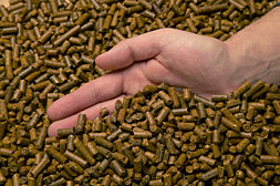 Buy Canola meal & pellets