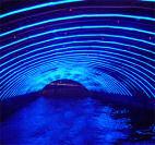 Buy Fiber Optic Lighting