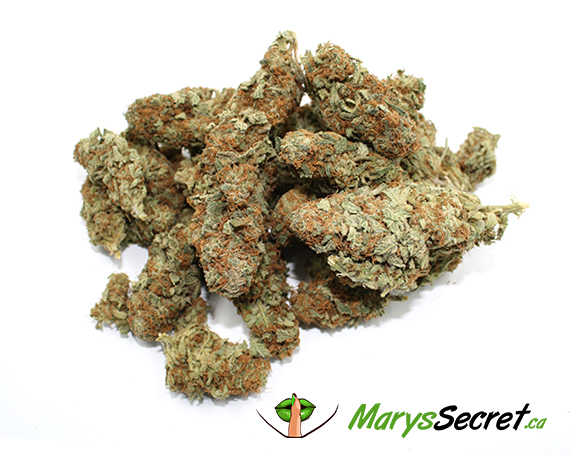 AFGHAN SKUNK (DRIED CANNABIS – INDICA DOMINANT)