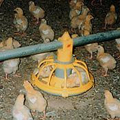 Mackay feeding systems