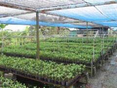 Nursery Ground Cover & Winter Protection