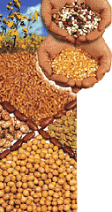 Canadian agricultural grains