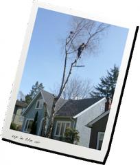 Hazard tree and crane removals