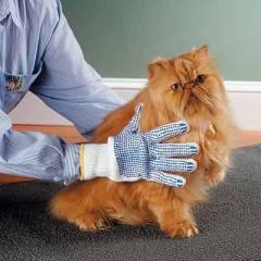 Services du groomer (coiffeur pour les animaux)